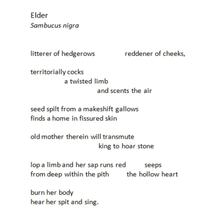 elder by john c nash