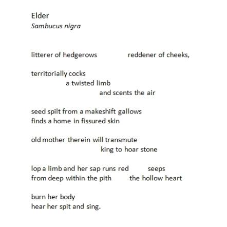 elder by john c nash
